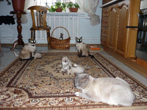 сколько кошек на фото?