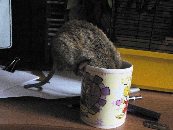 Он обожал зелёный чай. Причем так, что не оттащить было ни за уши, ни за хвост.