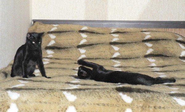 Эта кокетка постоянно заигрывает с котом. Это было в самом начале нашей с ними совместной жизни, продолжается и сейчас. Кошка с вечной течкой, как я её называю.