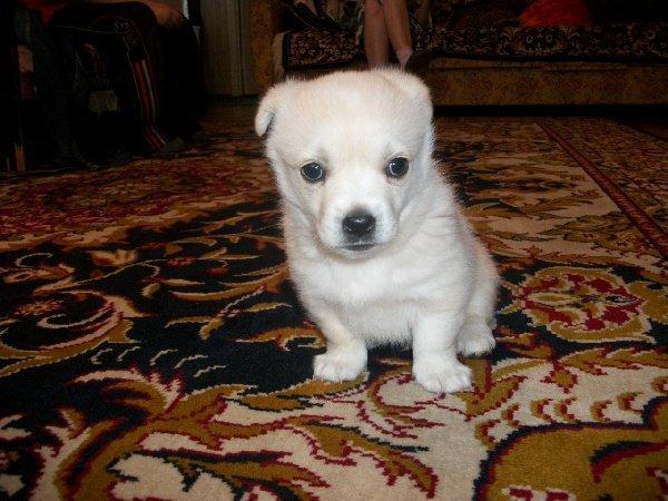 мой маленький неизвестный щенок