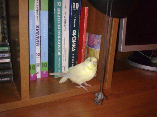 Очень любит книги!