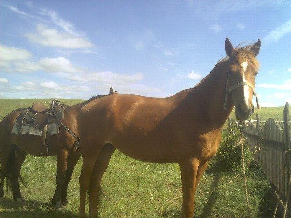 Зовут Зорька (подходящее имя), на фото - 3 года, но она очень высокая, а вот рядом её брат (7 лет), меньше размером.