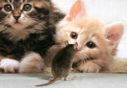 Юмор. Кошки (немного грызуны) ДОБАВЛЯЙТЕ СВОЙ ЮМОР О ВАШИХ ПИТОМЦАХ!