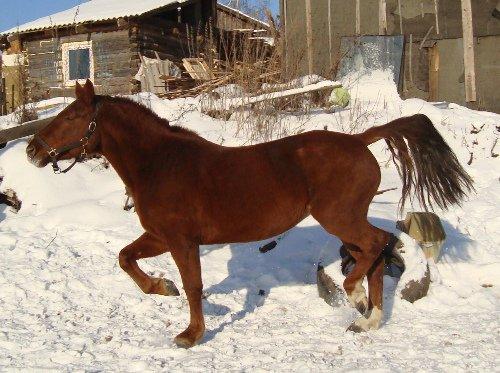 лошадку зовут Венера,лошадь стоит в продаже. очень милая и добрая.