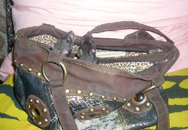 Хома с дуськой в сумке.