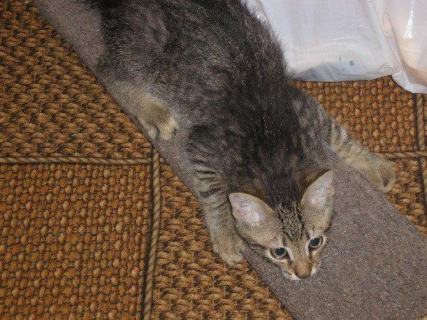 Вот мой котейка в 3 месяца!