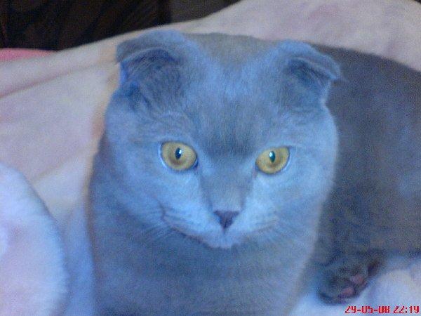 Голубой я голубой,не хотят играть со мной!