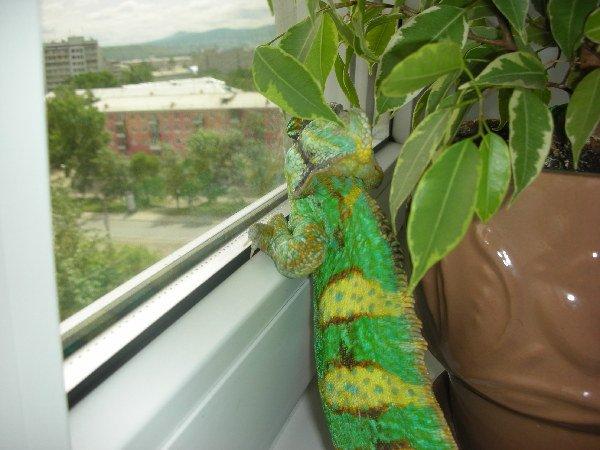 Смотрит в окно.