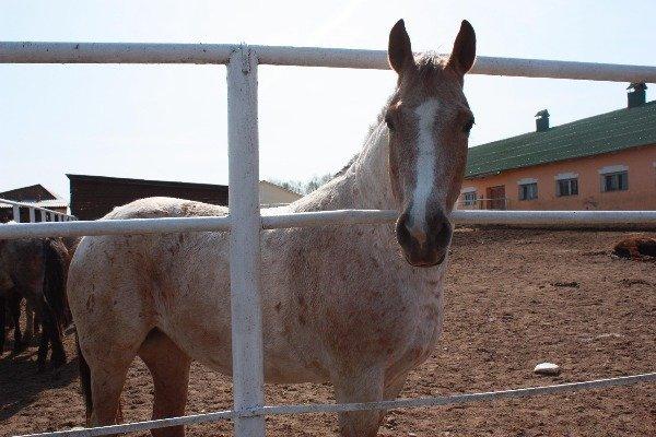 ушастая лошадка=)
