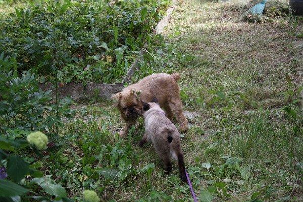 Мы приехали на ДАЧУ! Счастье для кошек и собак!