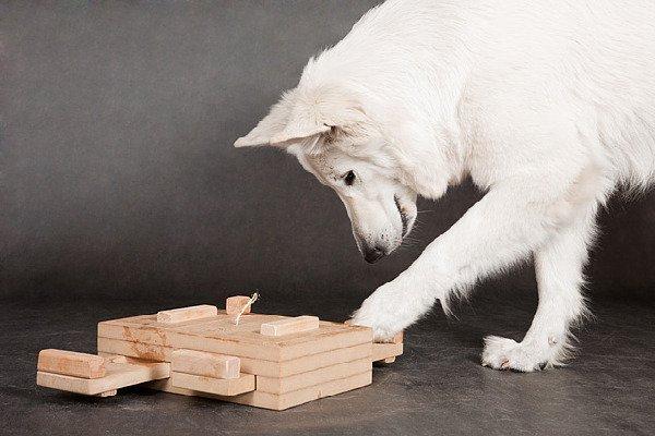 Интеллект собак и их тренировка