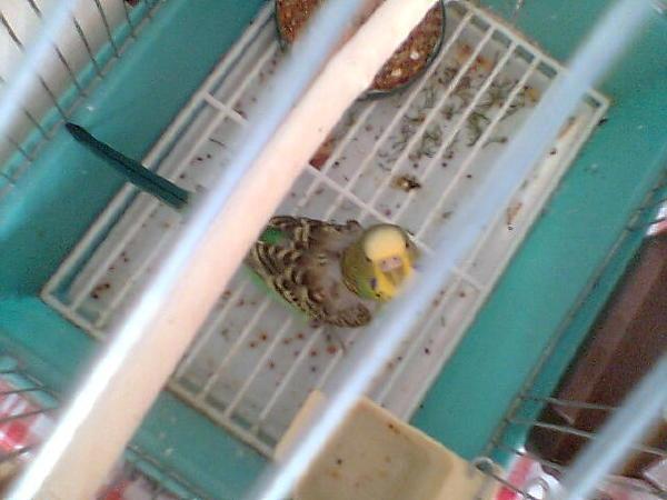 А вот этого попугайчика по имени Соня больше нет с нами