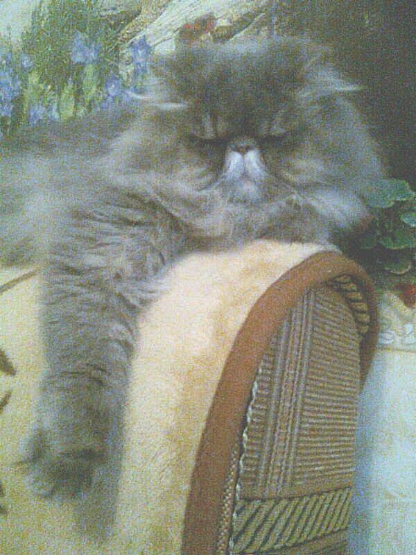 Её величество Алиса