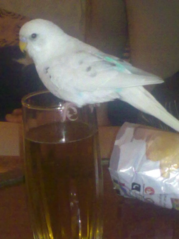 пьём пиво!!!
