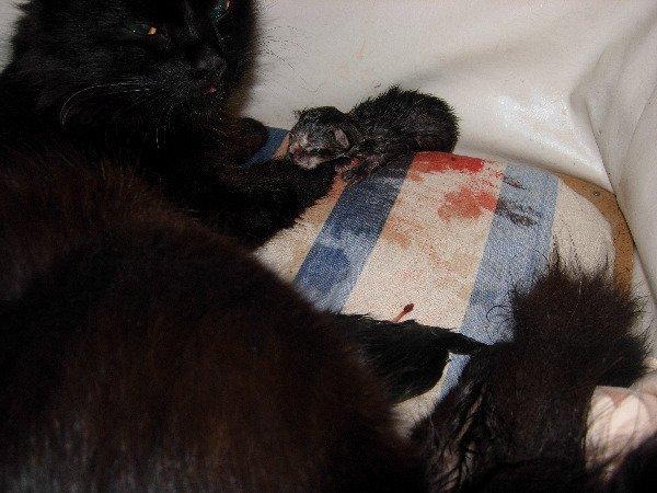родился первый котёнк