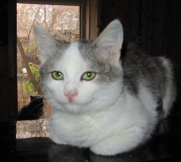 Кот Сашка с приюта