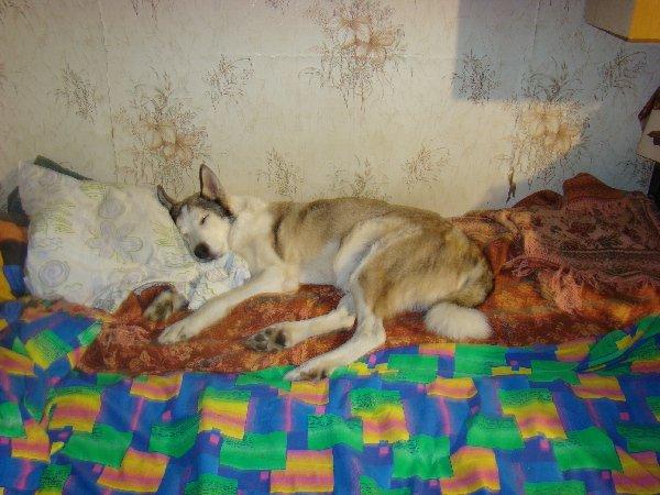 Как же спится хорошо после лесной прогулки