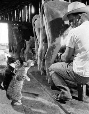 Хитрые кошки