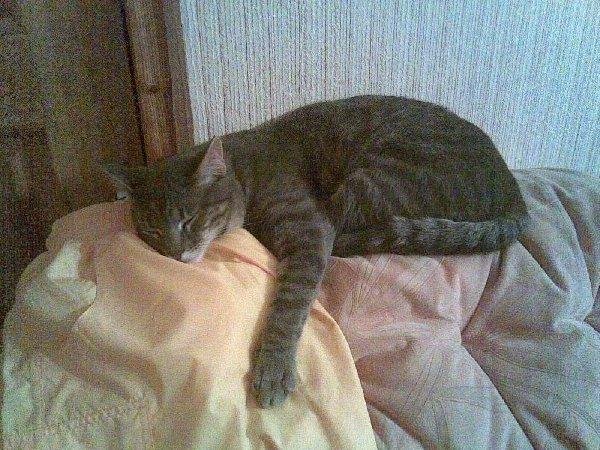 Кот Кеша дрыхнет на любимом диване.