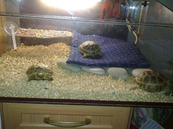 Turtles life