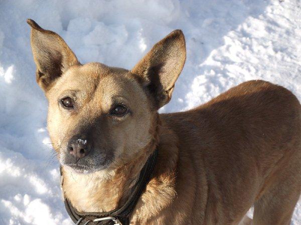 Моя собака Рекс