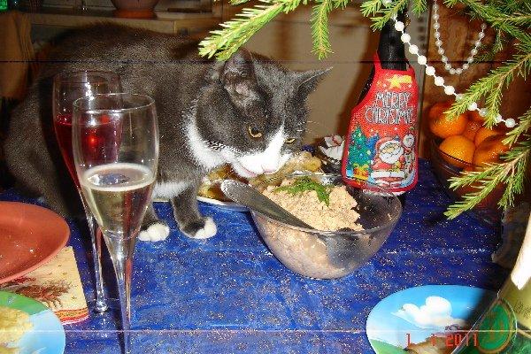 2011 - год Кота! С наступившим Новым годом! :)