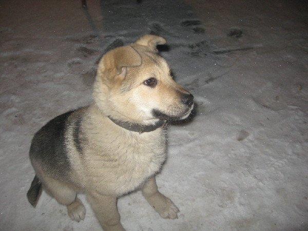 определение породы собаки по фото онлайн