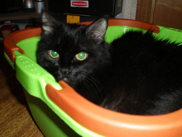 Мой любимый кот Вася. Прожил 17 лет 8 месяцев 25 дней
