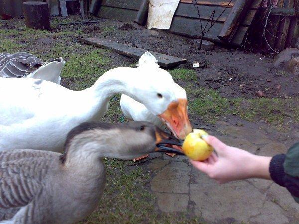 кушаем яблочко))))