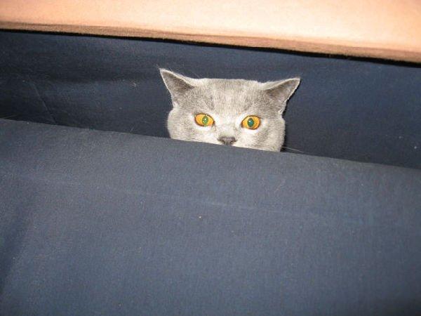 Котик Яшка.Играем в прятки