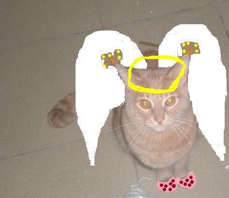 Марсик - ангел