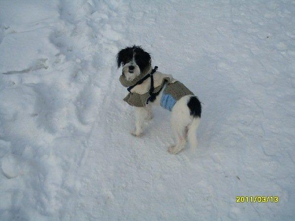 Помогите определить породу собаки