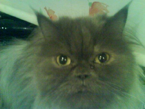 Но как не крути я люблю свою Мону, увидешь её глаза и всё простишь этому чертёнку:)