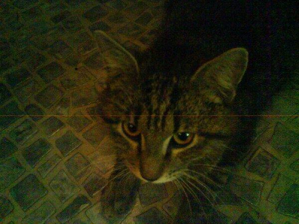 Очень грустная история, этот кот пришёл к моей двери и не уходил.я запустила его к себе.Он не ел а только пил,лежал на полу,не вставал,потом ночью у него кровотичение было,как видно серьёзные проблемы с почками были и он умер.