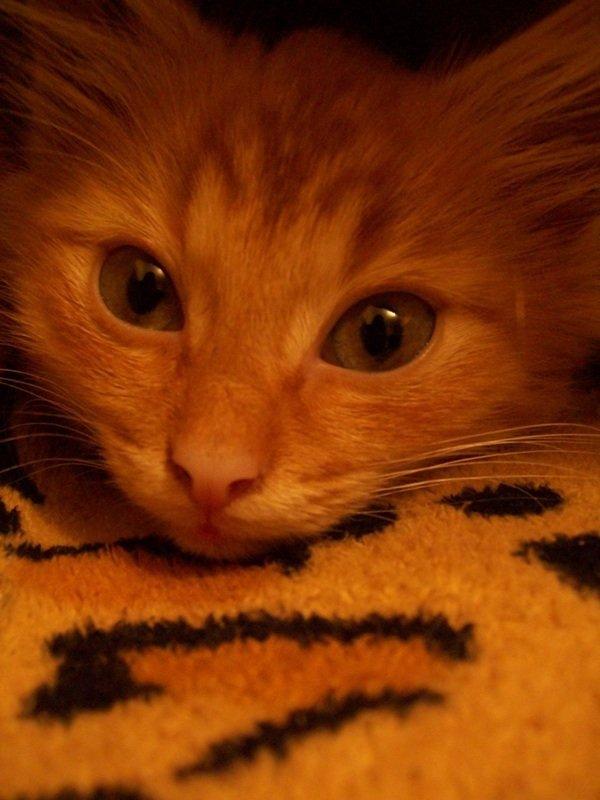 Умный глазастый котенок, в первый день пребывания в  нашем доме)