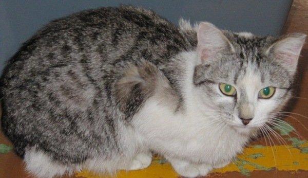 кошка Машка с приюта - нашла хозяина на выставке кошек в Уфе 9 апреля 2011г.