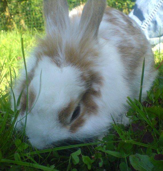 Кролик Гоша.