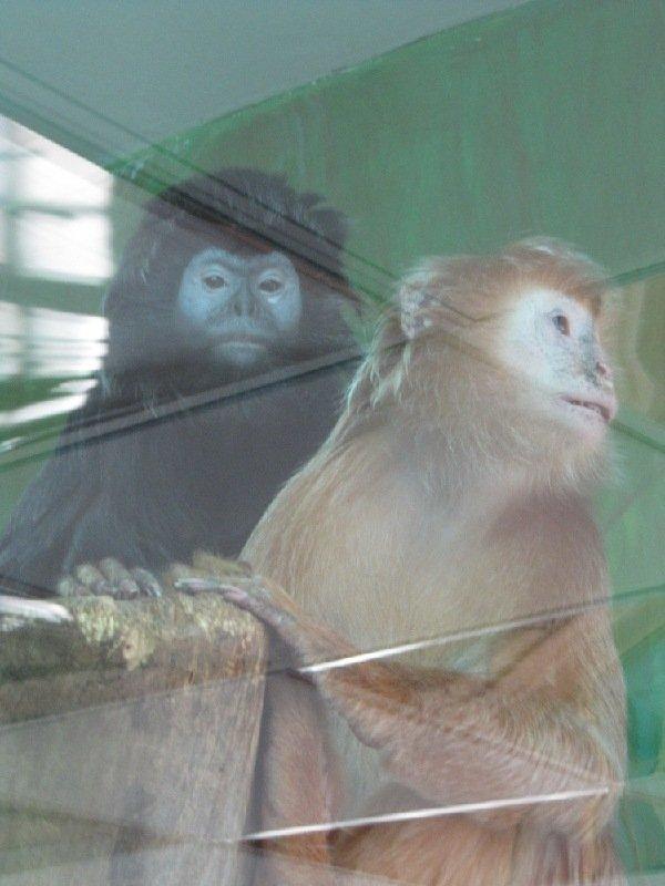 в Новосибирском зоопарке.