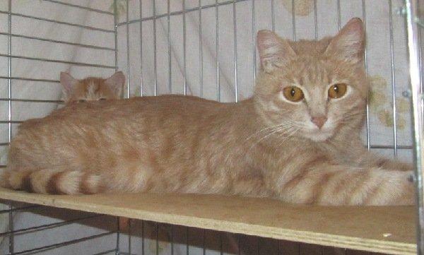 Кошка - мама с приюта с котенком.