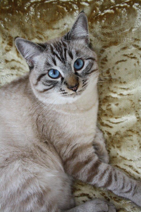 Саломошка, мой сладкий мальчик)