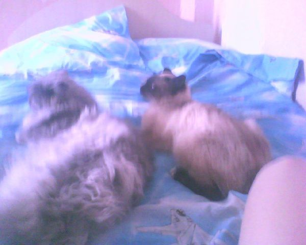 2 голубчика