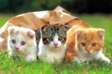 котятам всегда нужна мама!