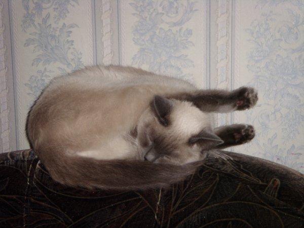 Так мы спим))))