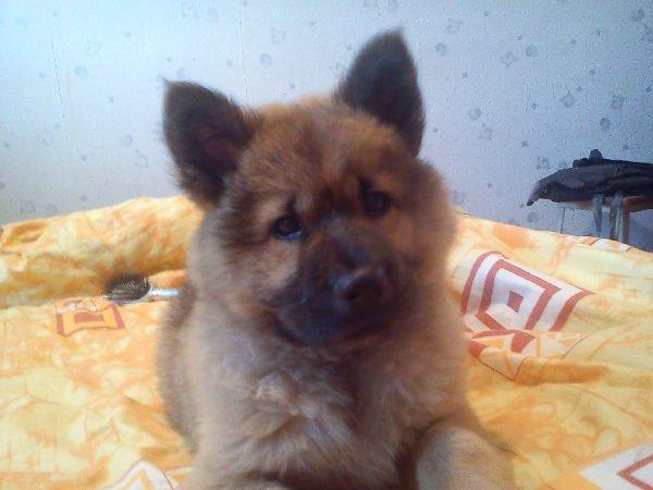 помогите нам точно узнать породу собаки