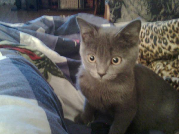 Мой кот Дима