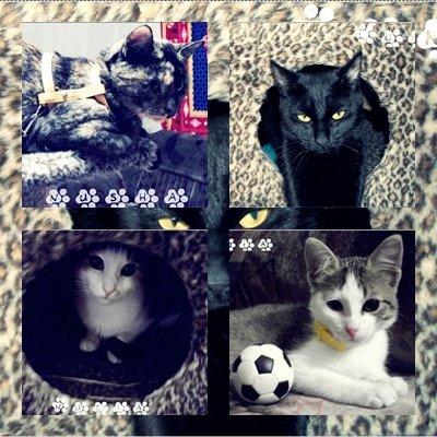 Это все мои кошки: Нюша-трёхцветная,Нюся-беленькая с пятнами,Луна-чёрная,Маруся-такая же как Нюся только она ещё маленькая и у неё 1 глаз коричневый, а другой голубой.