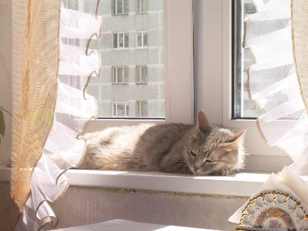 Я на солнышке лежу.... (кошка Фрося, 16 лет)