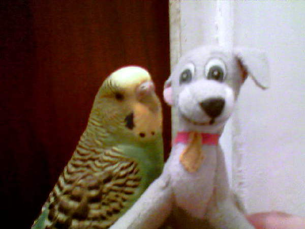 Моя птичка Гарри