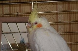 Создана вакцина от птичьего гриппа