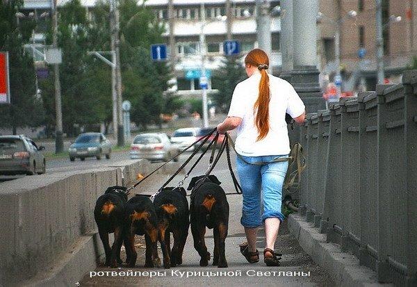 Идём на прогулку